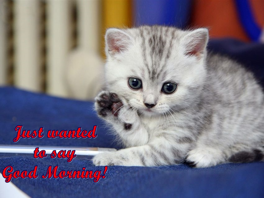 cute good morning funny image