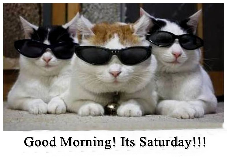 Funny Good Morning picture