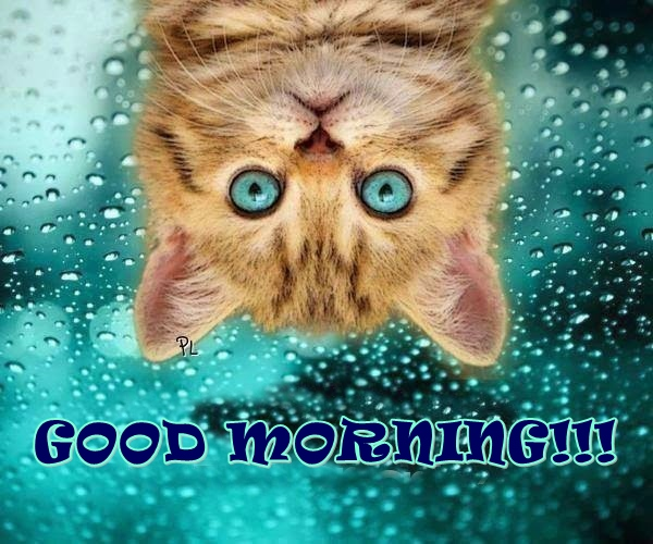 funny good morning image for her